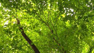 Thumbnail of post image 095